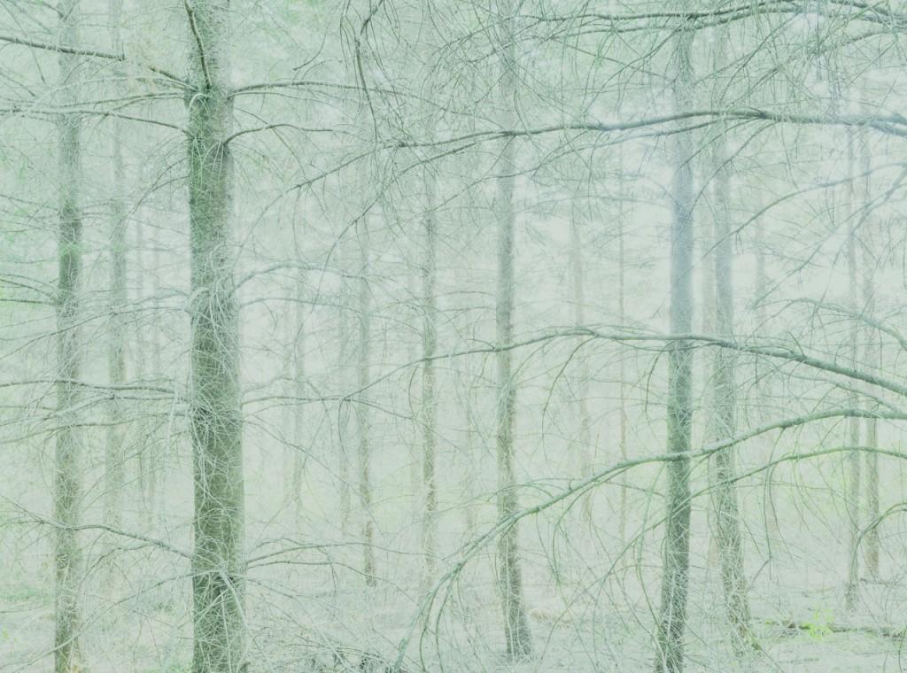 Blackwood_02_Gregor_Schuster
