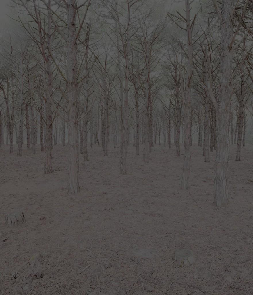Blackwood_03_Gregor_Schuster
