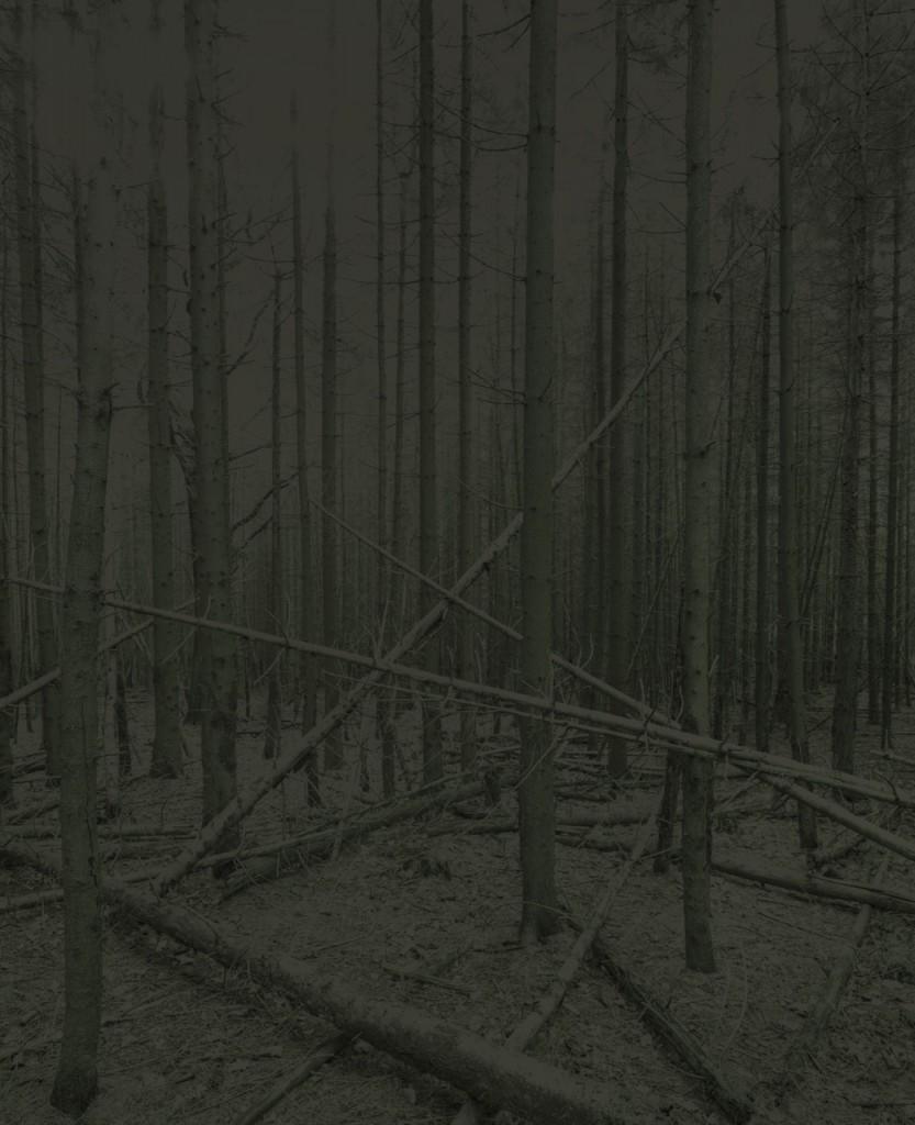 Blackwood_10_Gregor_Schuster