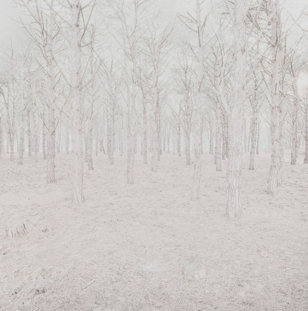 Blackwood_12_Gregor_Schuster