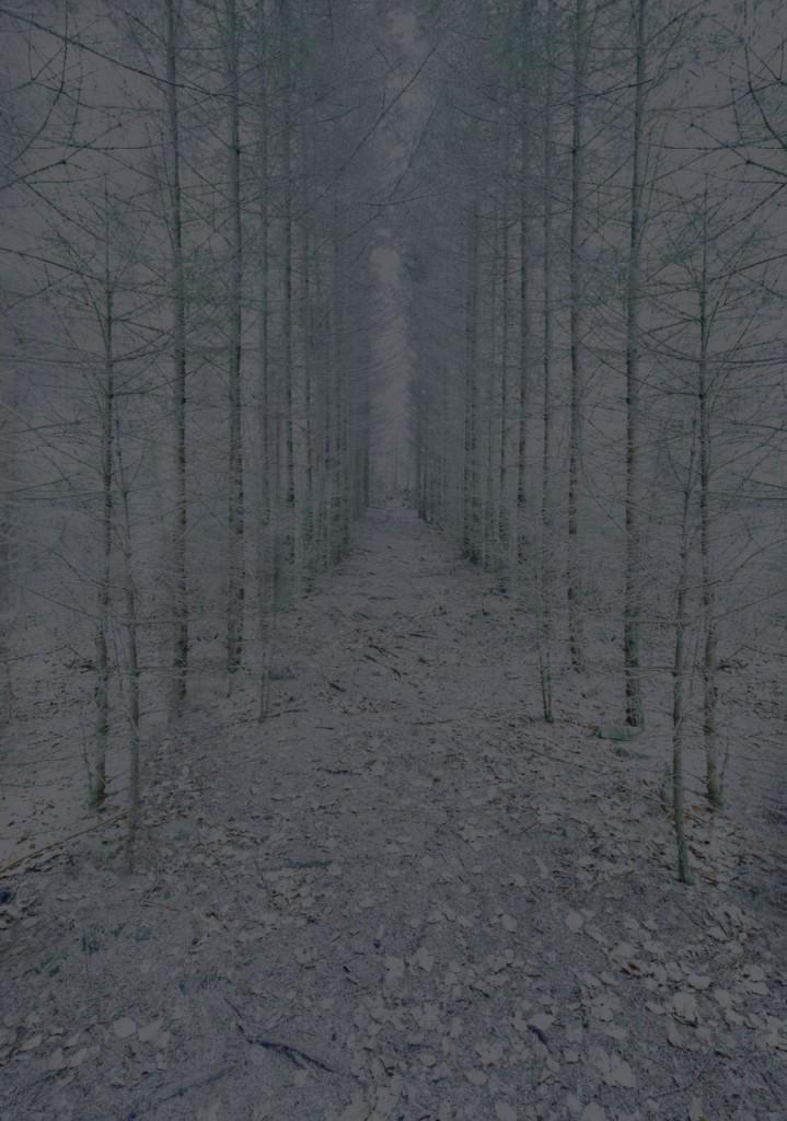 Blackwood_13_Gregor_Schuster