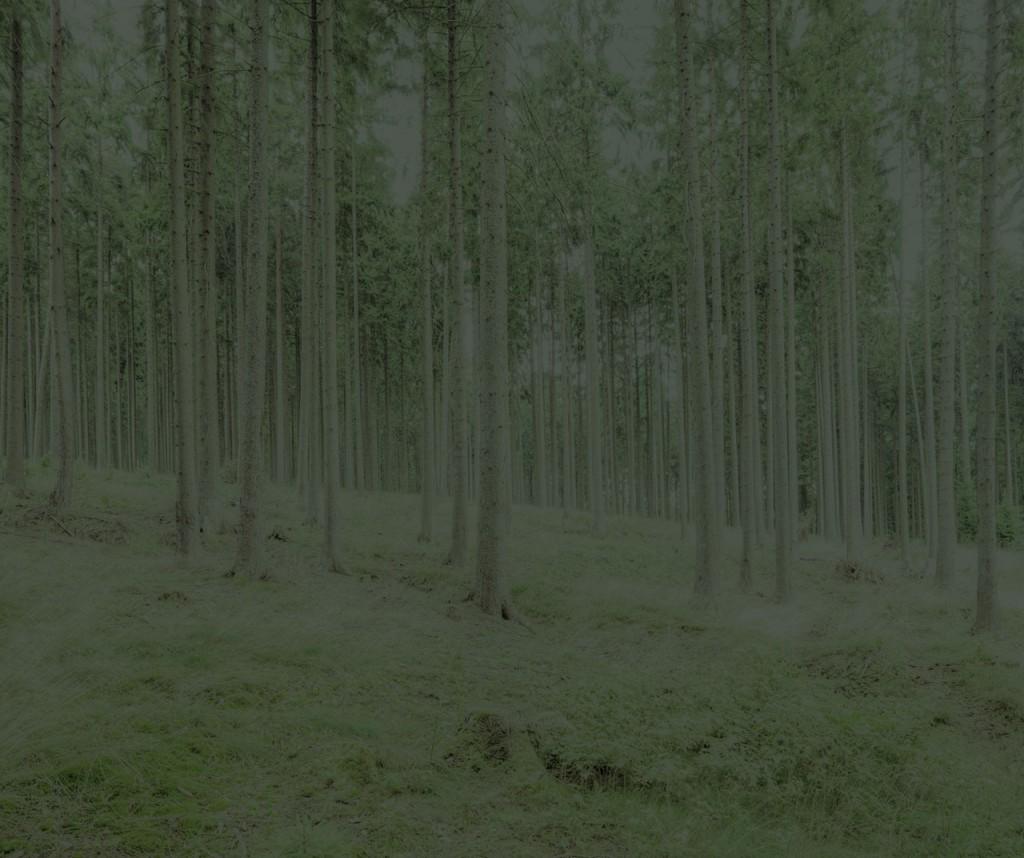 Blackwood_14_Gregor_Schuster