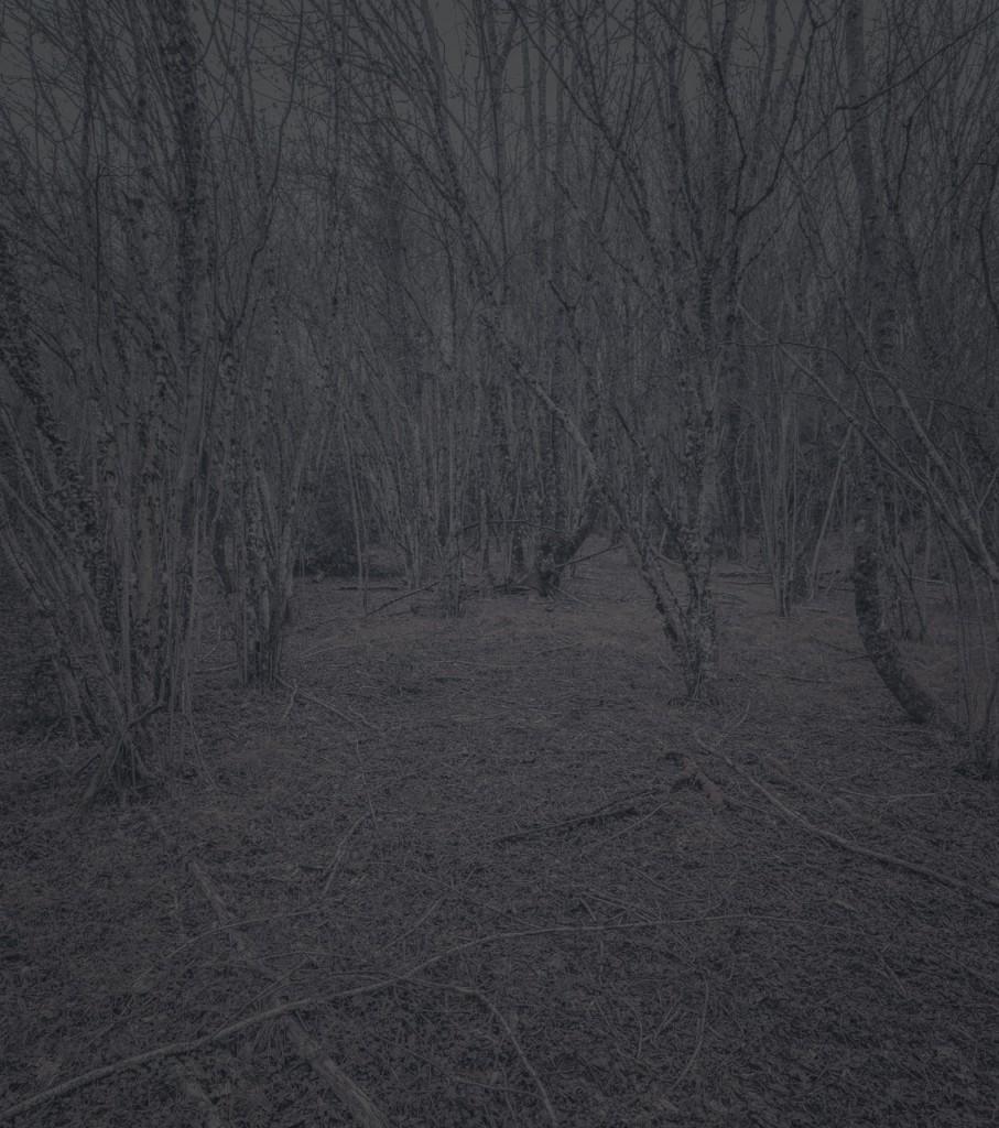 Blackwood_20_Gregor_Schuster
